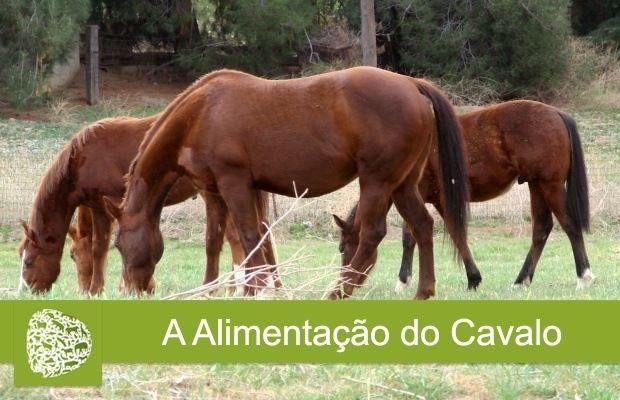 A Alimentação do Cavalo